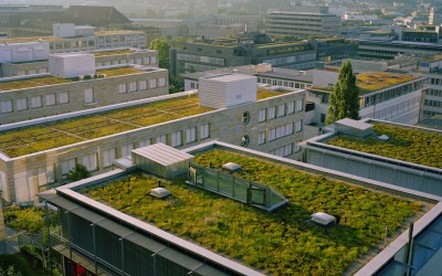 Green-roofing Workshop