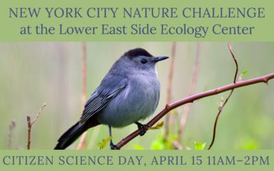 New York City Nature Challenge