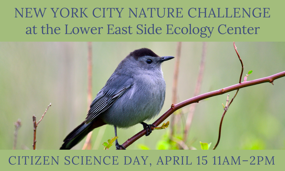 New York City Nature Challenge