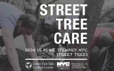 Chelsea Street Tree Care